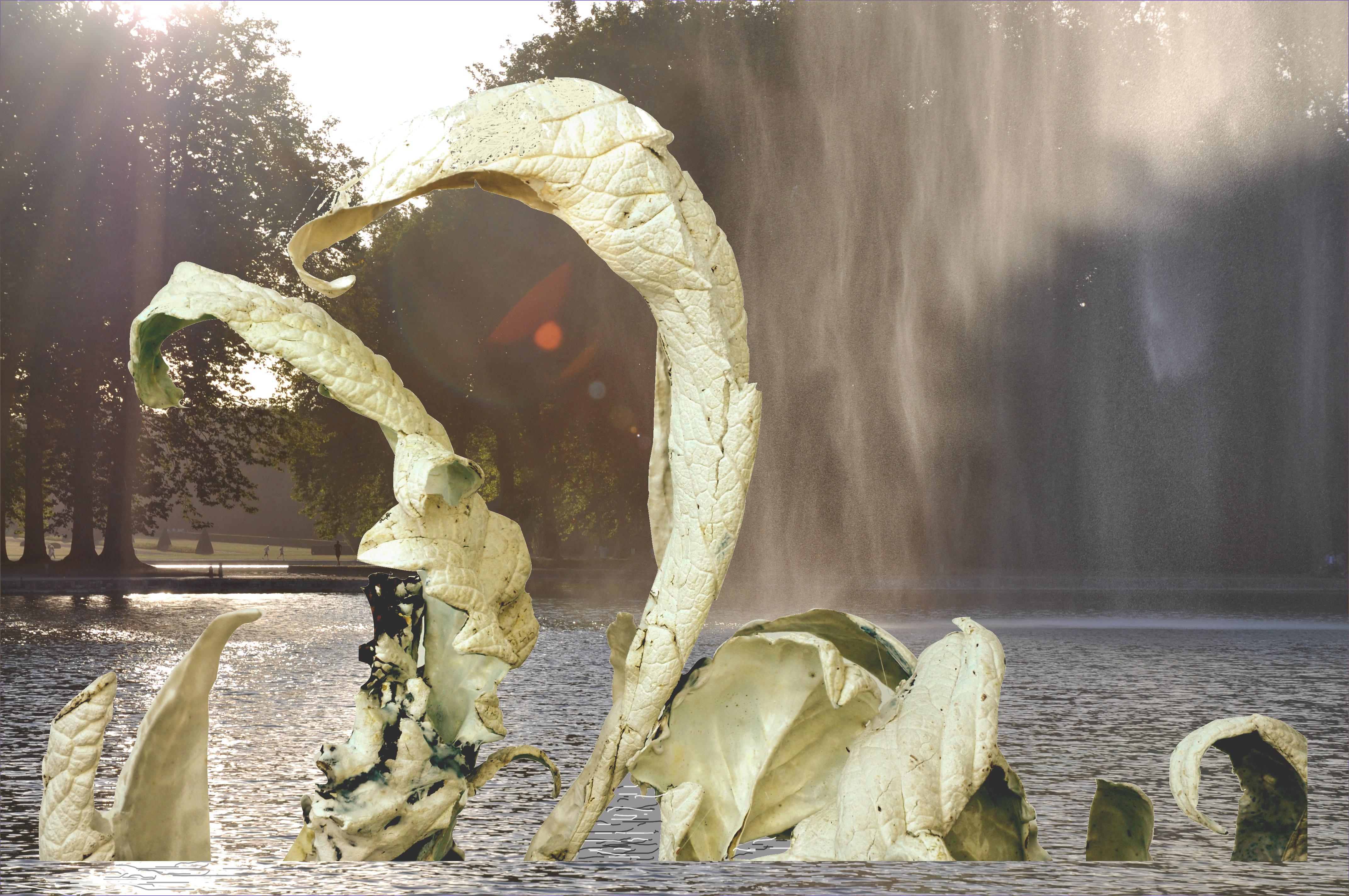 Planche Cygne -Dans l'eau-