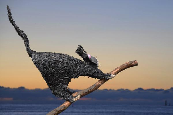 Planche Volatil et chat - Le chat -