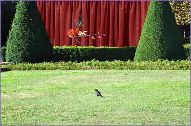 Planche Oiseaux Rares  - Chanteur en concert -