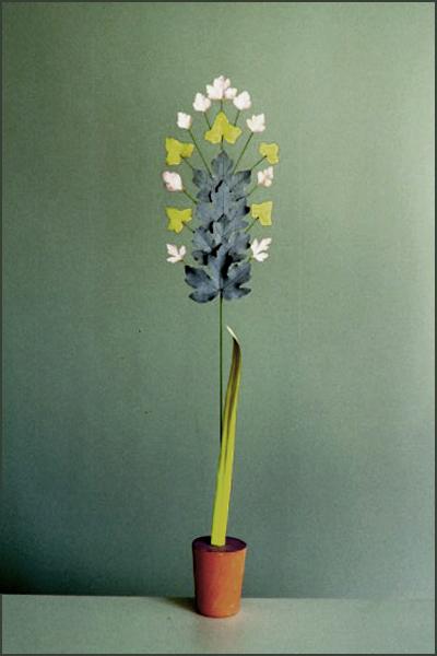 Planche Plantes Naines -Jacinthe -