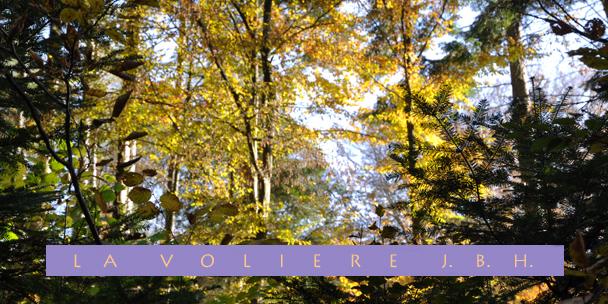 Dans la forêt de  saint Jean d'Ormont
